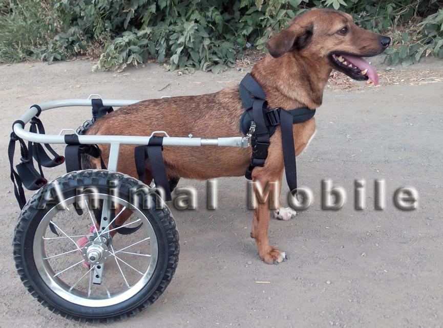Инвалидная коляска для таксы своими руками 145