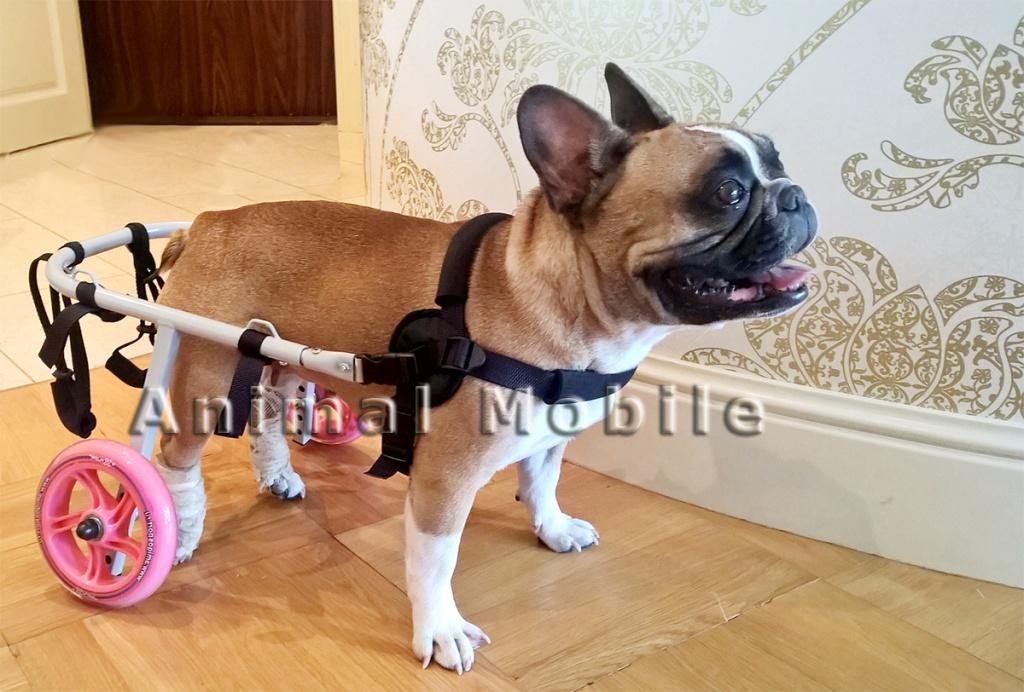 Как сделать своими руками инвалидную коляску для собаки